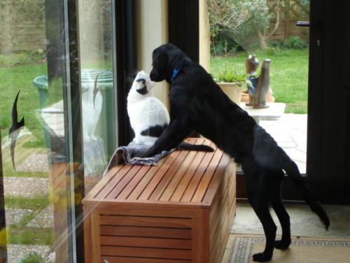 Snoopy und Blacky