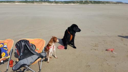Kyro und Nayra in der Normandie (1)
