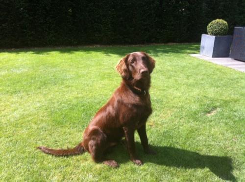 Marley (5)
