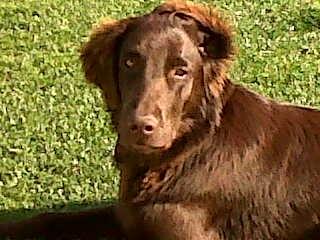 Marley (6)