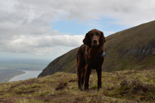 76 Miles Irland 2016 (2)