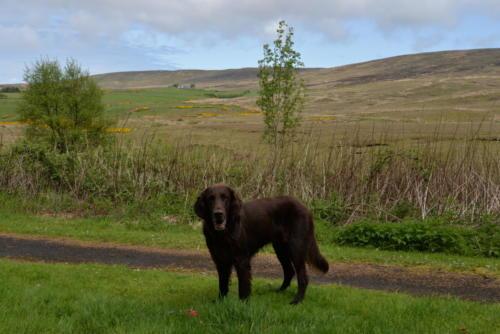 76 Miles Irland 2016 (5)