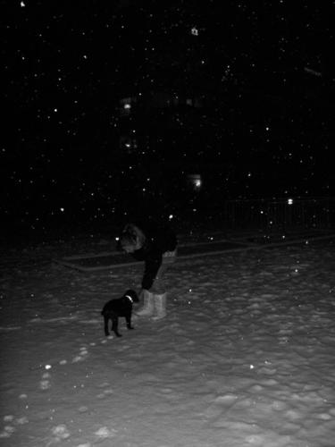 mylo im schnee