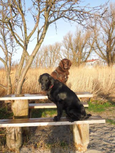 187 Amy und Owen an der Ostsee (3)
