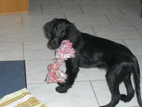 Paco (2)