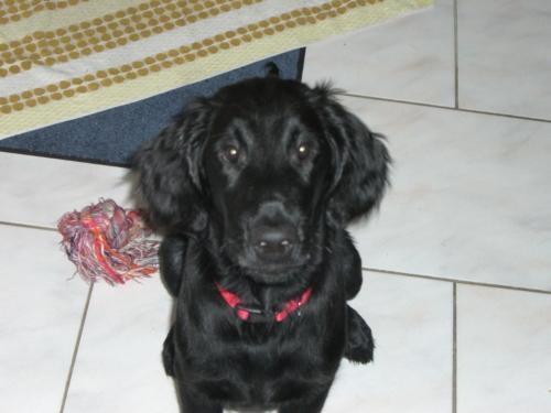 Paco (3)