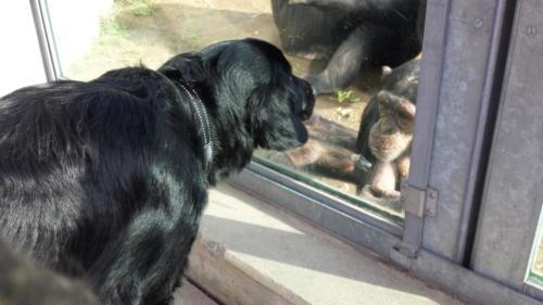 88 Philou im Zoo (3)
