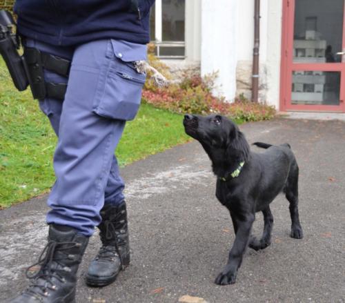 97 AAA 2013-11-11 AR Polizei 102 (2)