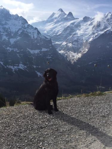 87 Quando in Grindelwald (1)