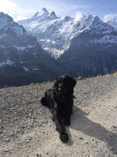 87 Quando in Grindelwald (2)