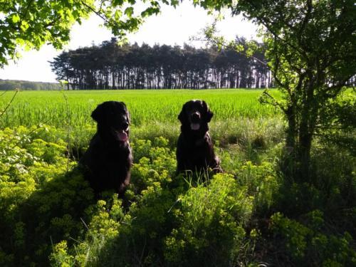 178 Rhea und Owen in Ketzür