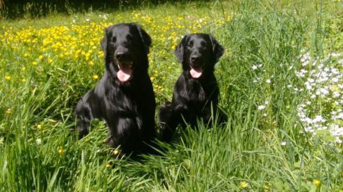 184 Rhea und Owen