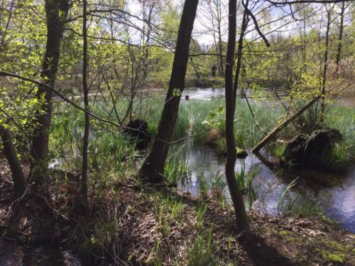 185 Rhea-Owen Wasserseminar April 2017 (2)