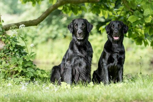 187 Rhea und Owen (2)