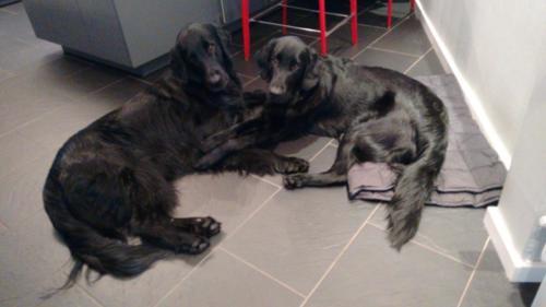 189 Rhea und Owen