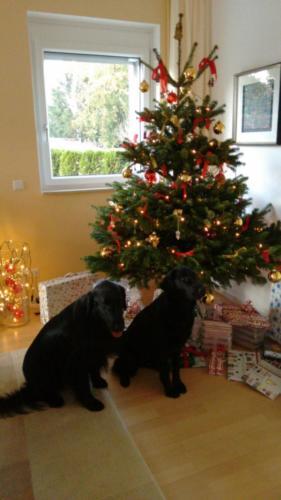 192 Rhea und Owen