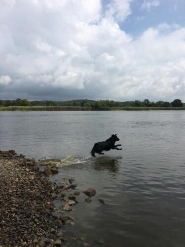 Rhea an der Oder