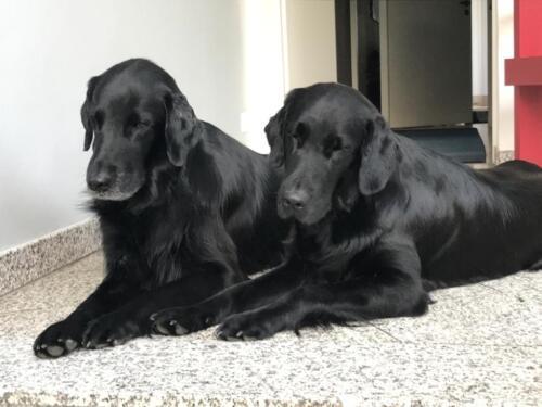 Rhea und Owen (1)