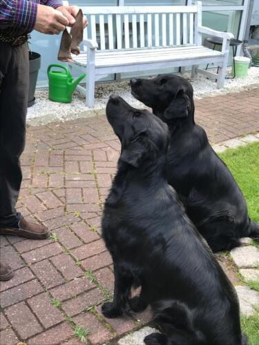 Rhea und Owen (1) (1)