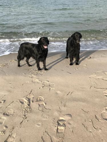 Rhea und Owen (1) (1) (1)