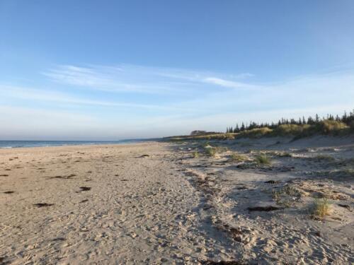 Rhea und Owen an der Ostsee (2)