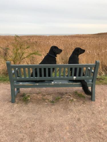 Rhea und Owen an der Ostsee (3)