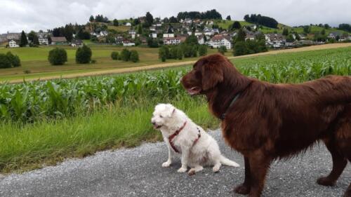 Bo und Nebi (12) (1)