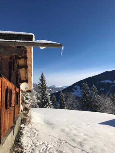 85 Shino (12) Vorarlberg
