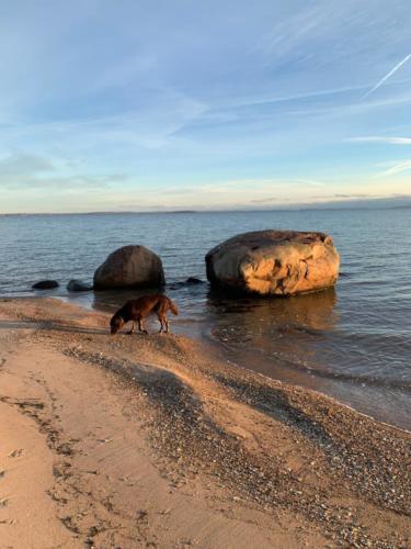 Siro und Miles auf Rügen (2)