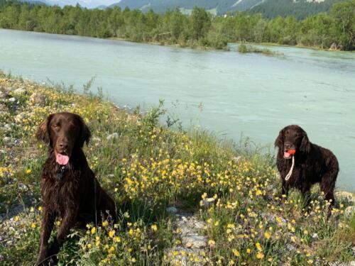 Siro und Miles in Silvaplana (1)