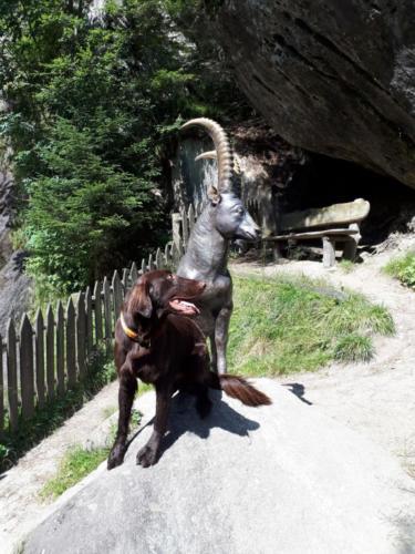 Tabasco im Südtirol (3)