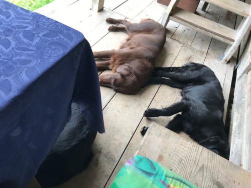 Unsere Hunde (1)
