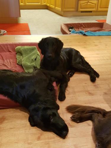 Unsere Hunde (2)