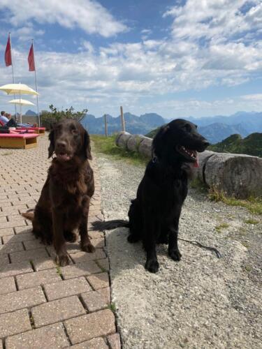 Jamie und Tito Flumserberg (1)