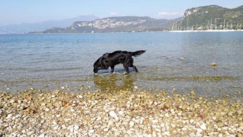 Uyak - Ferien am Gardasee (1)