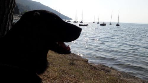 Uyak - Ferien am Gardasee (4)