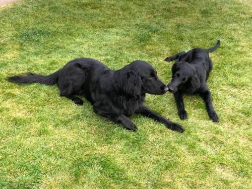 Whoopi und Quennie (4)