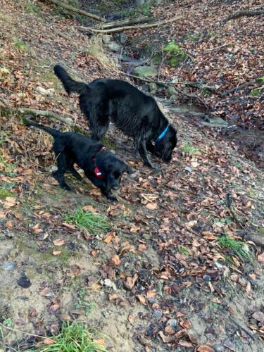 Whoopi und Quinnie (1)