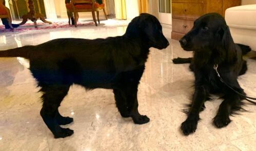 Whoopi und Quinnie (3)